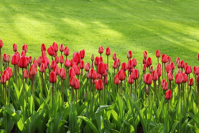 Importance of having a good website and local SEO for a Gardening Company